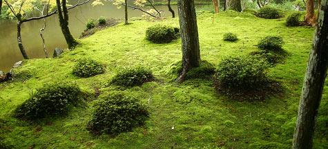 Aio accueil - Jardin japonais mousse ...