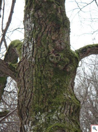 arbre_ecorce.jpg
