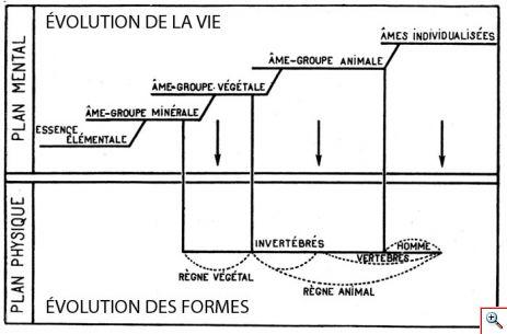 evolution_formes.jpg