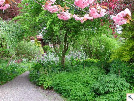 garden_jo.jpg